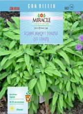 Miracle Eczane Adaçayı Tohumu (50 Tohum) 50 Adet