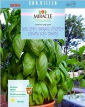 Miracle Tatlı Geniş Yapraklı Fesleğen Tohumu (250 Tohum) 20 Adet