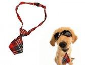 Kravat Şeklinde Köpek Tasması