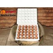 30'lu Gezyum Ekstra Taze Günlük Gezen Tavuk Yumurtası
