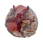 Loveq Deniz Kabuğu 20x14 Cm Drn 74317