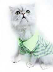 Fosforlu Sarı Gri Çizgili Polo Yaka Tişört By Kemique Kedi Kıya