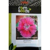 çin Karanfili Çiçek Tohumu 2 Dıanthus Chınensıs