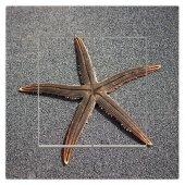 Dekoratif Baskılı Elektrik Düğmesi Priz Kapı Zili Deniz Yıldızı