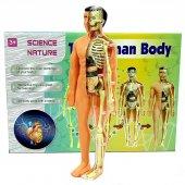 Insan Vücudu 3d Eğitim Seti