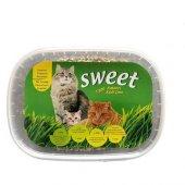 Naturel Sweet Kedi Çimi