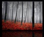 Orman Kanvas Tablo