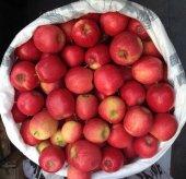 Aşılı Elma Fidanı Çeşitleri