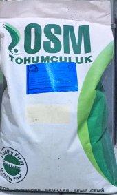 Sunter Yonca Tohumu 10kg