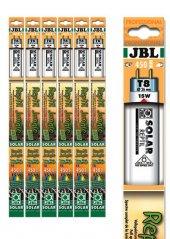 Jbl Solar Reptıl Jungle T8 38w 1047 Mm 9000k
