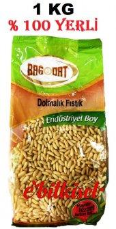 Dolmalık Fıstık (Çam Fıstığı) Bağdat Baharat 1 Kg Ekonomik Boy